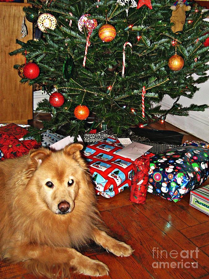Dog Photograph - Guardian Of The Christmas Tree by Sarah Loft