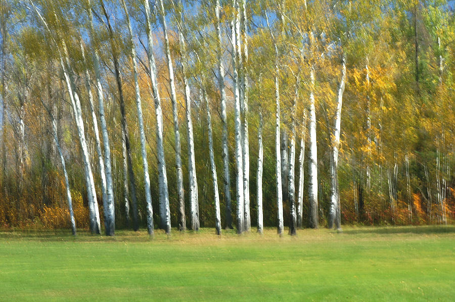 Aspen Forest Photograph - Guardians Of The Green by Bill Morgenstern