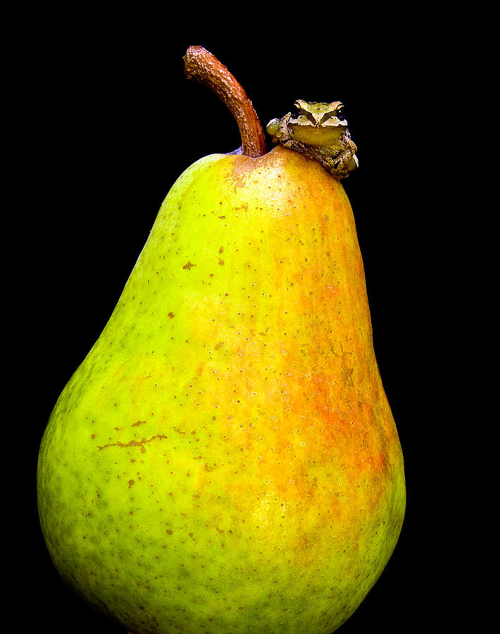 Frog Photograph - Guest A-pear-ance by Jean Noren