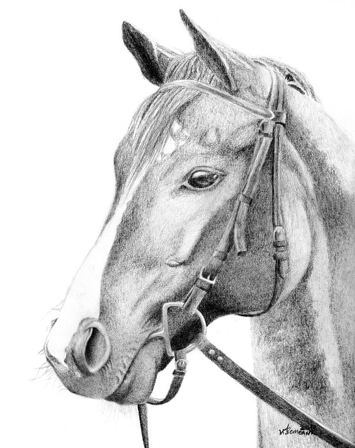 Horse Drawing - Guide by Kayleigh Semeniuk