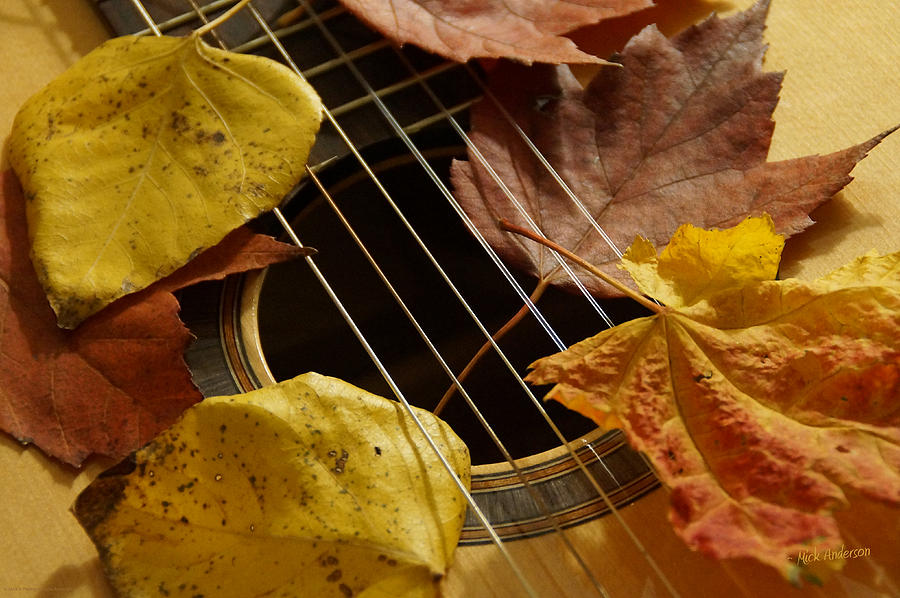 идёте гитара и осенние листья картинки свиней