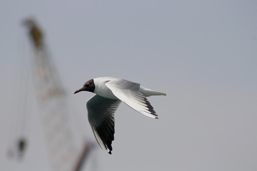 Bird Photograph - Gull And Crane by Frederic Vigne