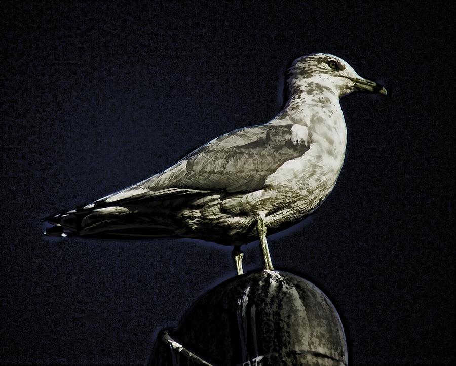 Gull At Sundown Photograph by Joe Bledsoe