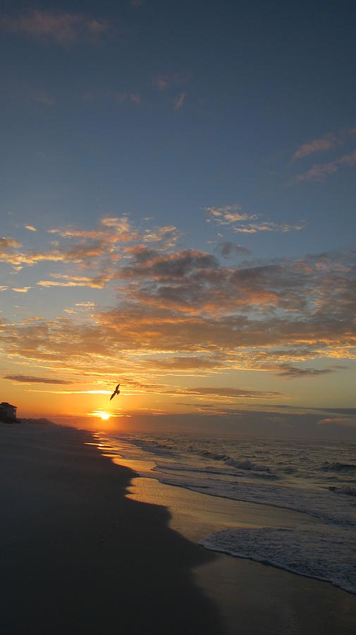 Water Photograph - Gull At Sunrise by Denise   Hoff