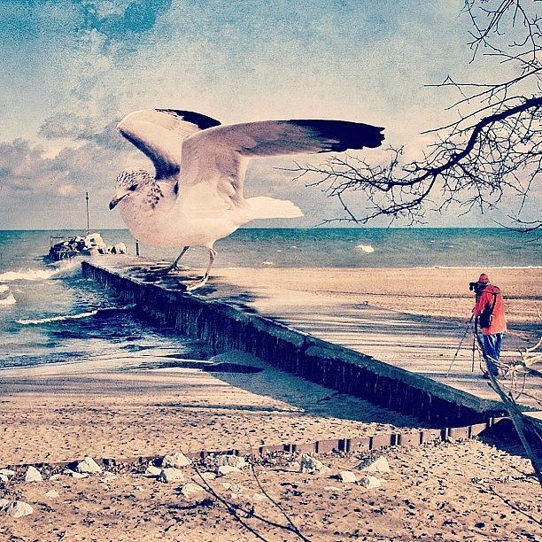 Beautiful Photograph - #gull #beautiful #bird #seagull #water by Jill Battaglia