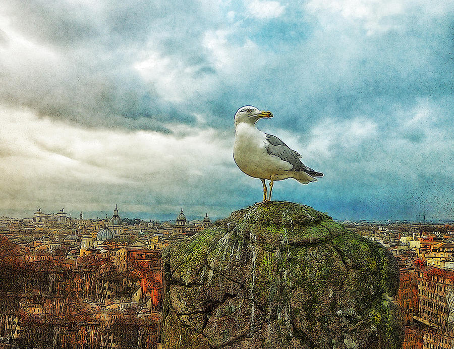 Photo Painting - Gull Over Rome by Jack Zulli