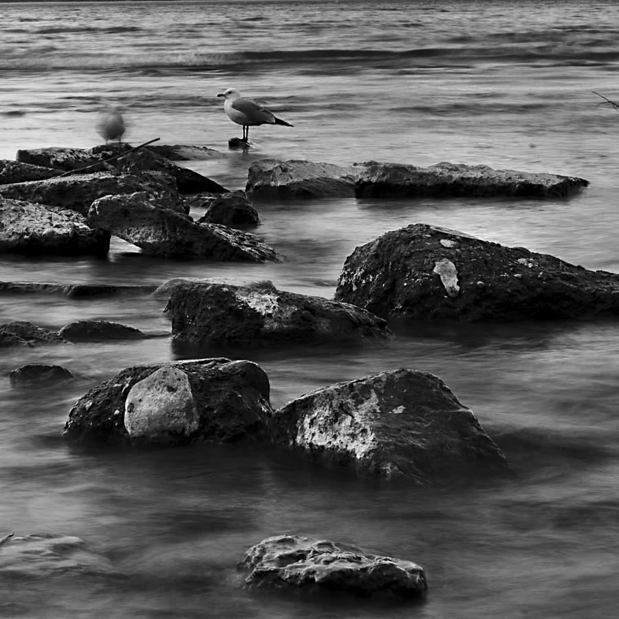 Rocks Photograph - Gull Rock by Rod Sterling