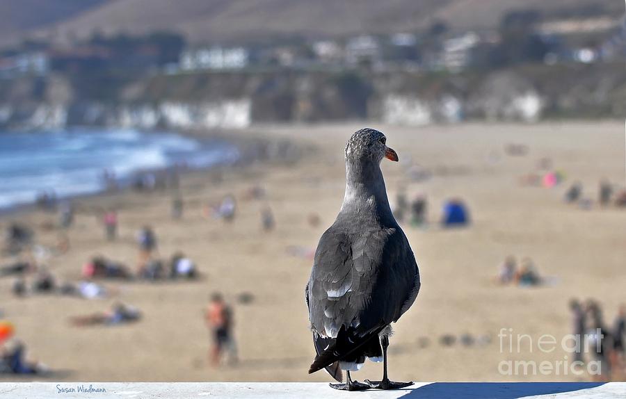 Susan Wiedmann Photograph - Gull Watching Beach Visitors by Susan Wiedmann
