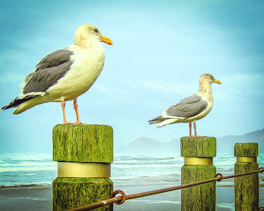 Beach Photograph - Gulls by Denise Darby