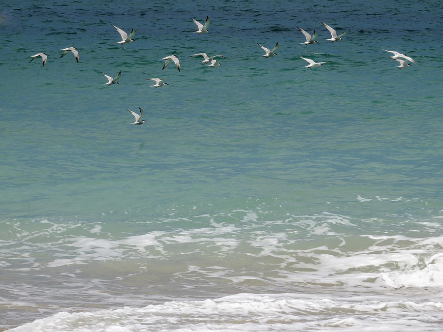 Seagull Photograph - Gulls Flying Over The Ocean by Zina Stromberg