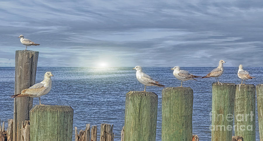 Birds Photograph - Gulls On The Pier by Tom York Images