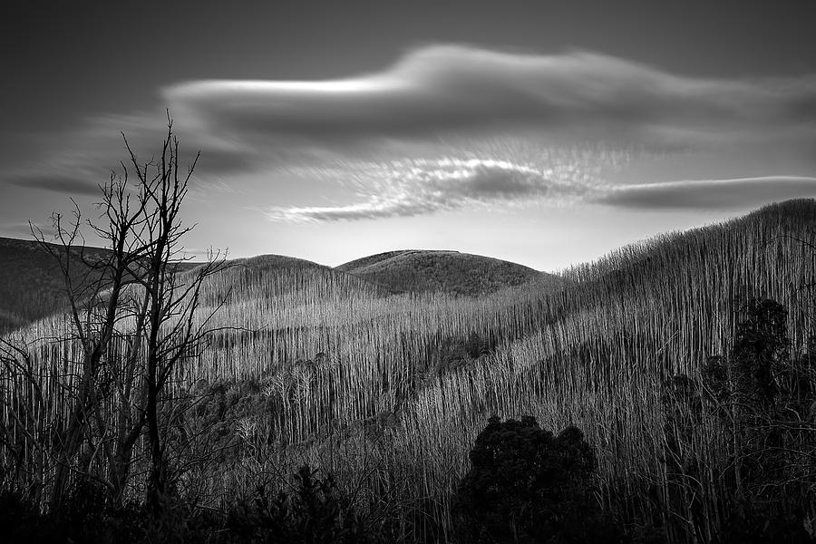 Long Exposure Photograph - Gums Of Grey by Mark Lucey