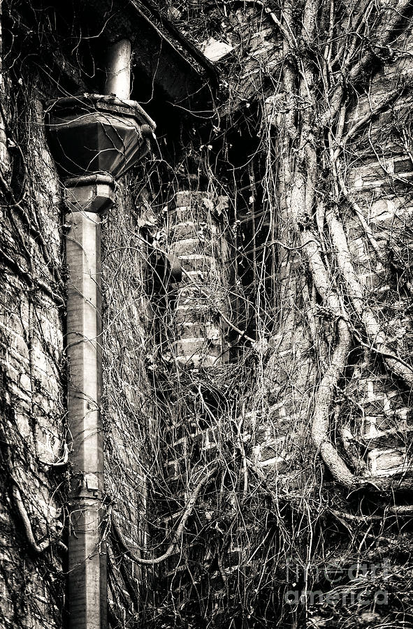 Gutter Pipe Photograph - Gutter Pipe by John Rizzuto
