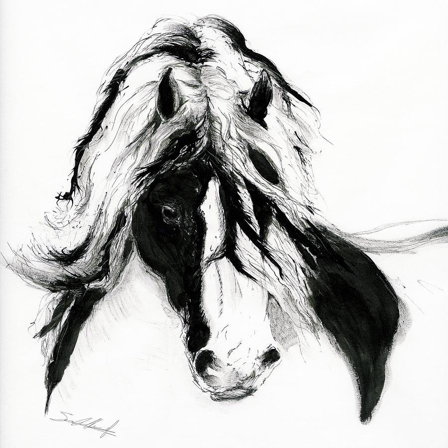 gypsy cob drawing by sara cuthbert