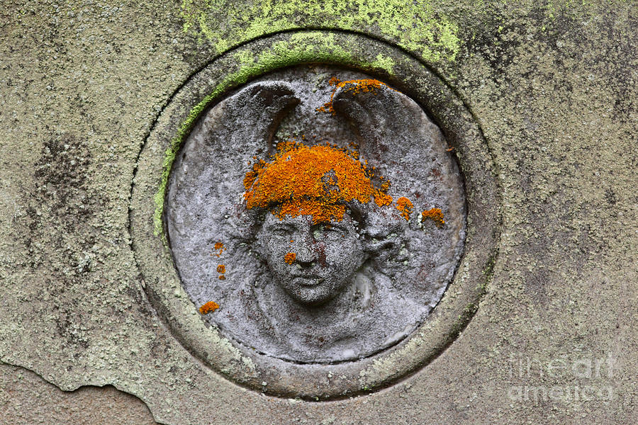 Cemetery Photograph - Hair Transplant by James Brunker