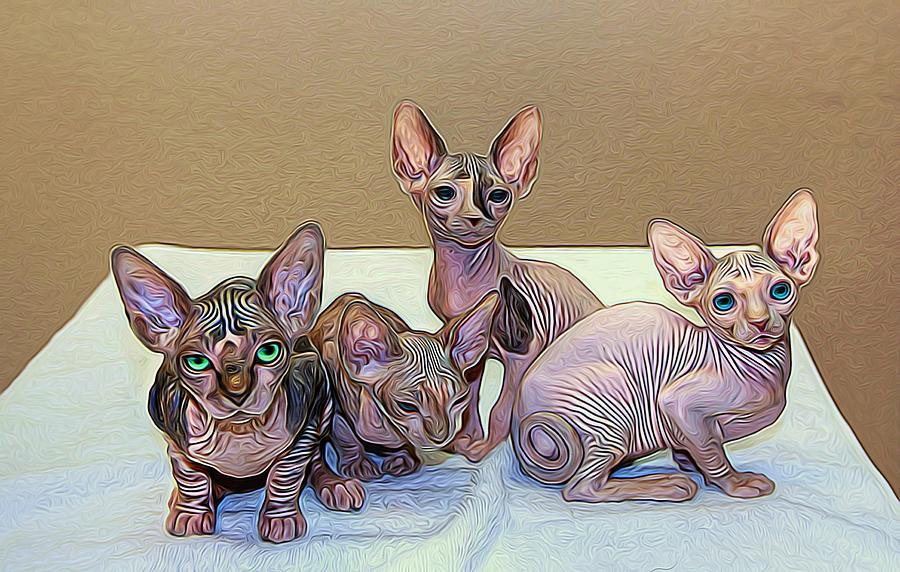 Hairless Kittens