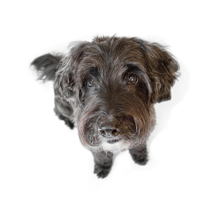 Dog Photograph - Hairy Dog Photographic Caricature by Natalie Kinnear