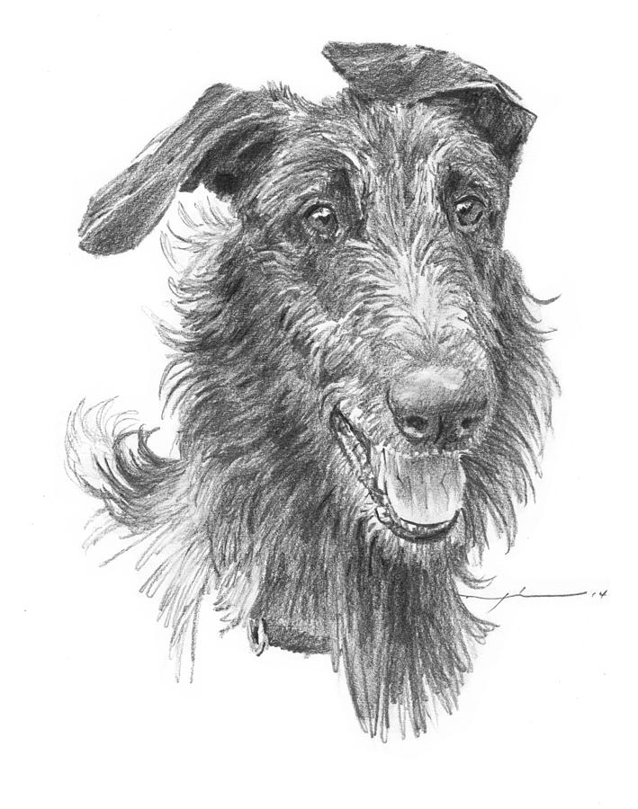 Hairy Handsome Dog Pencil Portrait Drawing by Mike Theuer