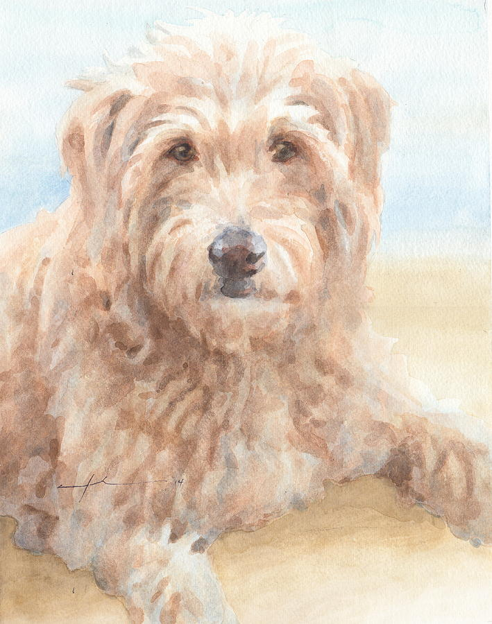 Hairy Sheepdog Watercolor Portrait Drawing by Mike Theuer