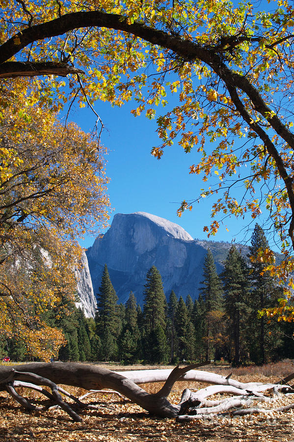 Landscape Photograph - Half Dome In Yosemite by Alex Cassels