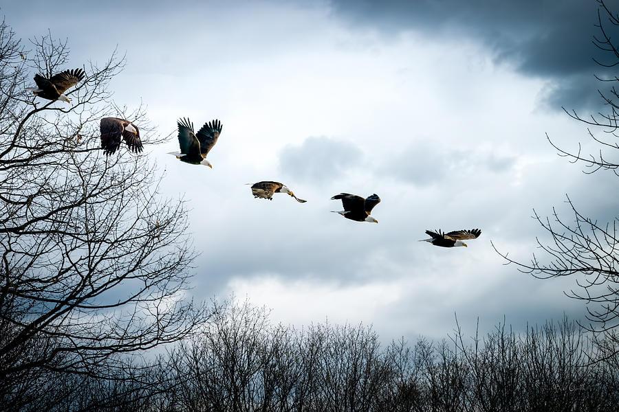 Eagle Photograph - Half Second Of Flight by Bob Orsillo