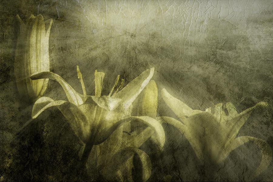 Lilies Photograph - Halleluiah by Diane Schuster