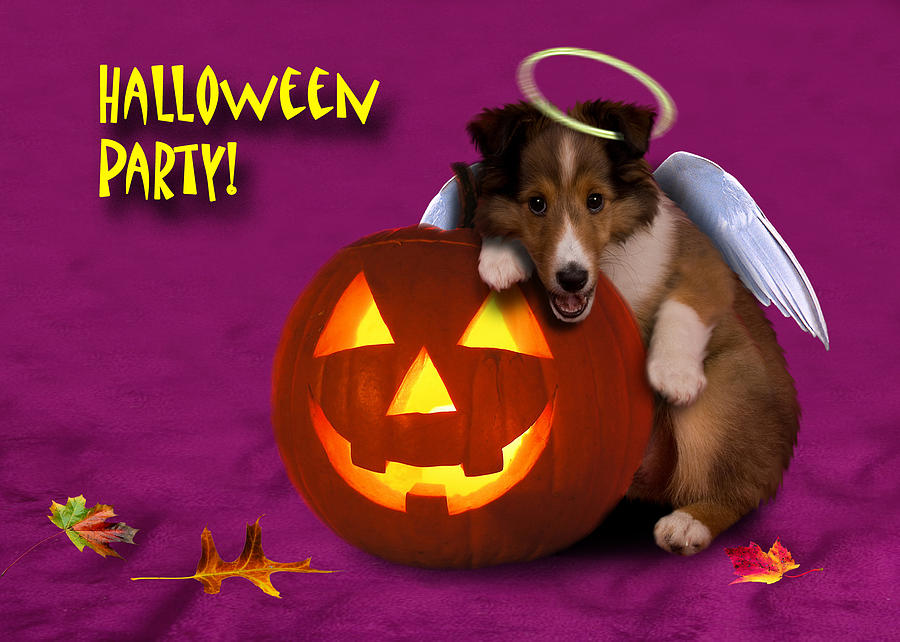 Youre Invited Photograph - Halloween Party Angel Sheltie Puppy by Jeanette K