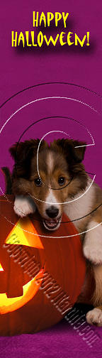 Bookmark Photograph - Halloween Sheltie # 417 by Jeanette K
