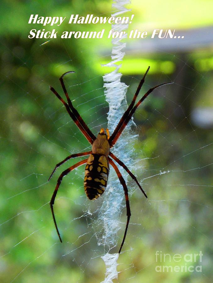 Spider Photograph - Halloween Spider by Annette Allman