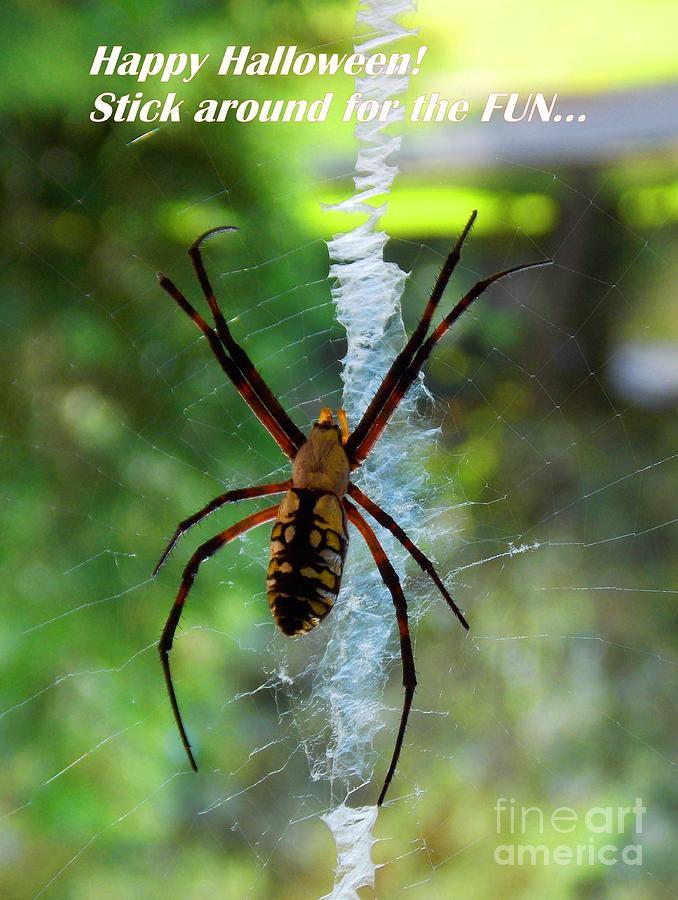 Halloween Spider Photograph - Halloween Spider by Annette Allman