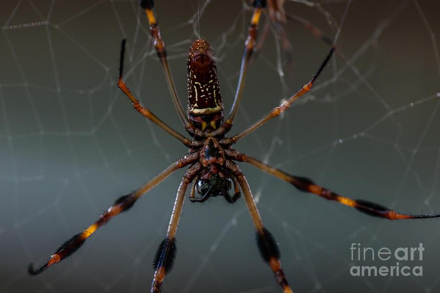 Halloween Spider Photograph