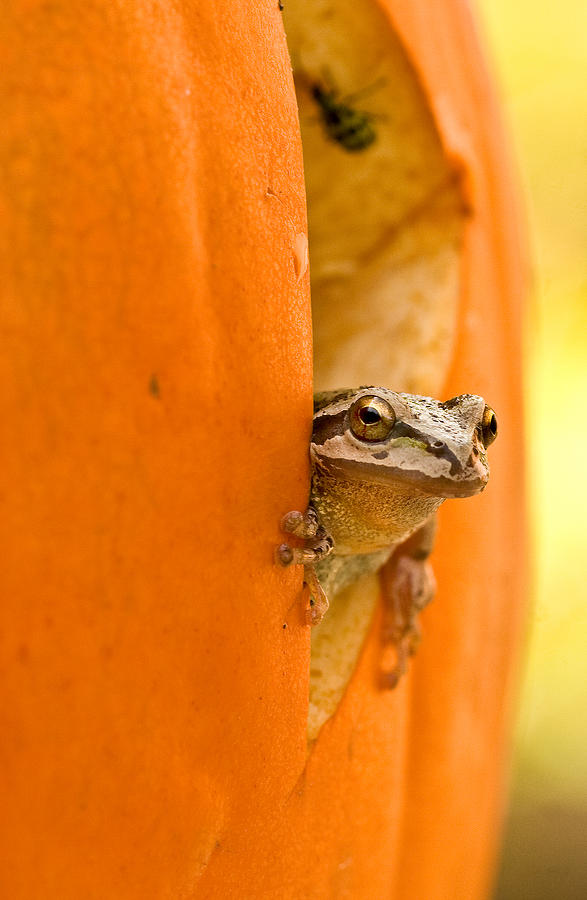 Frog Photograph - Halloween Surprise  by Jean Noren