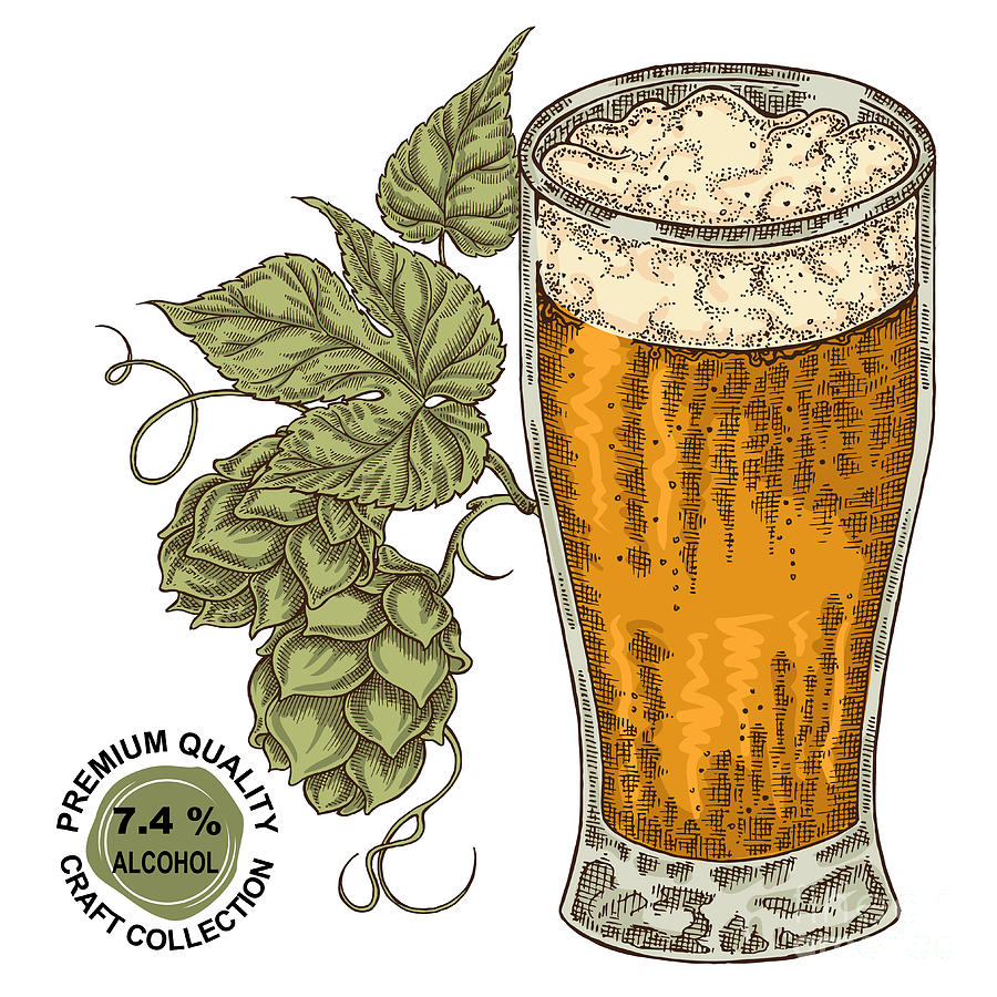 Craft Digital Art - Hand Drawn Beer Glass With Hops Plant by Jka