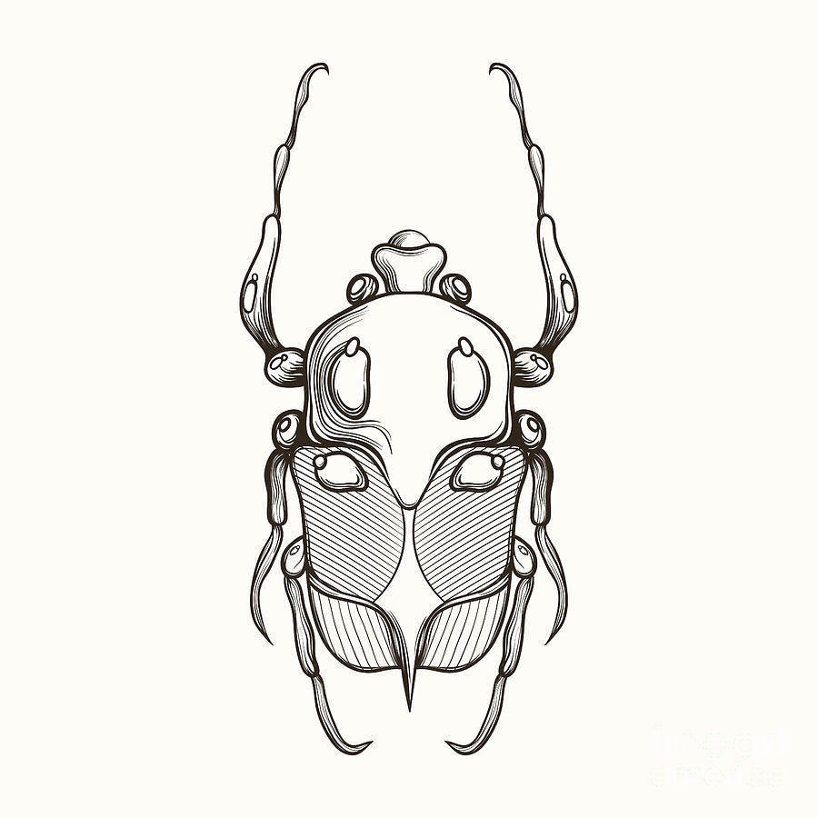 Shield Digital Art - Hand Drawn Engraving Sketch Scarab by Panki