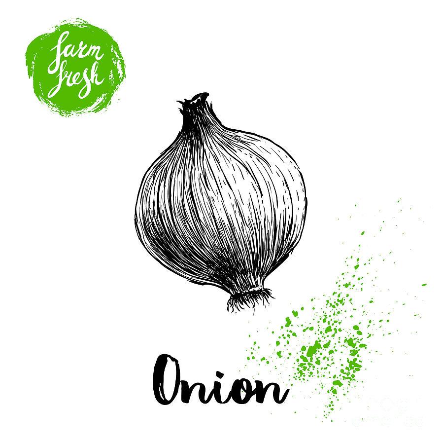 Engraving Digital Art - Hand Drawn Sketch Onion. Farm Fresh by Sketch Master