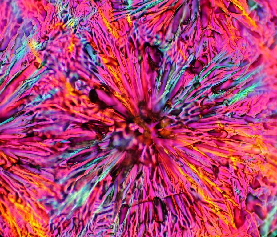 Crystals Photograph - Poppies Of Doom by Hodges Jeffery