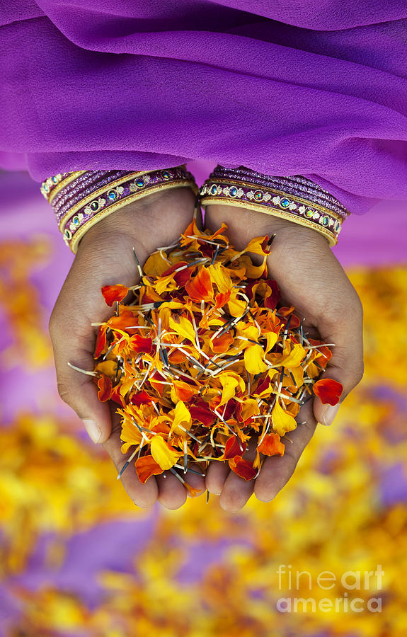 Indian Photograph - Hands Holding Flower Petals by Tim Gainey
