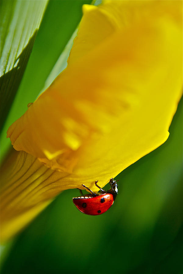 Ladybug Photograph - Hang On by Bill Owen