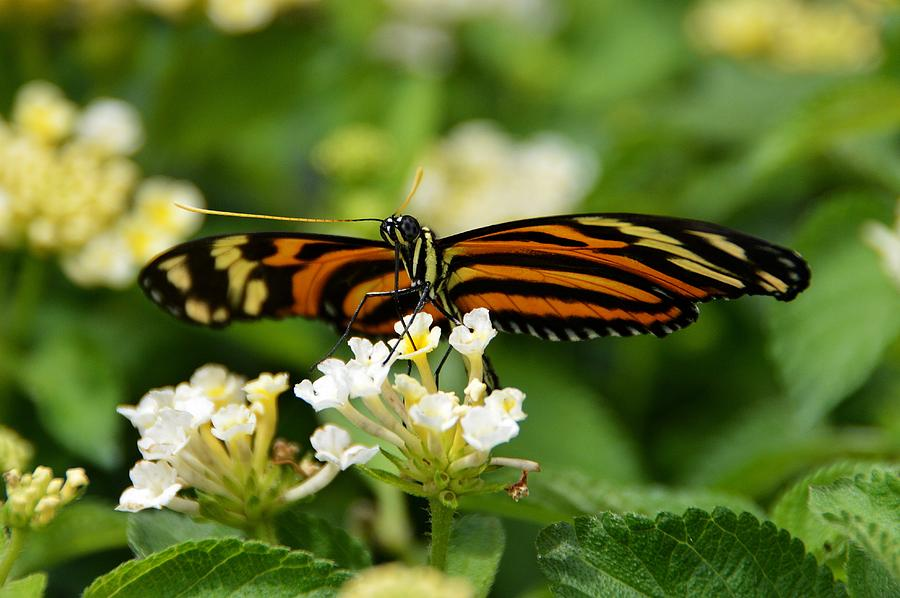 Butterfly Photograph - Hang On Tight by David Earl Johnson