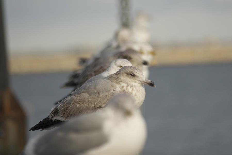 Seagulls Photograph - Hanging Around by Eugene Bergeron