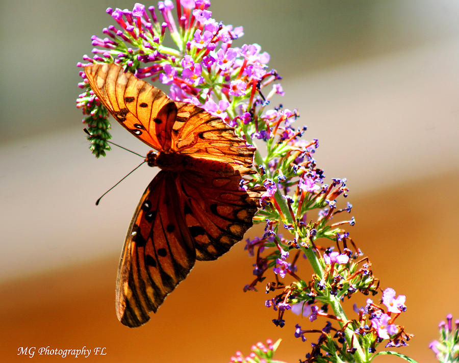 Butterfly Photograph - Hanging Butterfly by Marty Gayler
