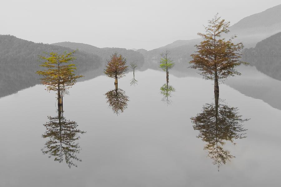 Appalachia Photograph - Hanging Garden by Debra and Dave Vanderlaan
