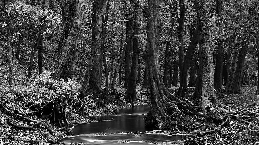 Trees Photograph - Hanging onto riverbank by Ferenc Farago - Photograph Art