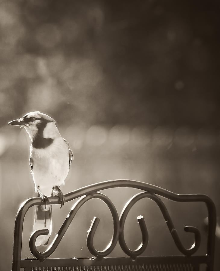 Blue Jay Photograph - Hanging Out In The Garden by Kim Henderson