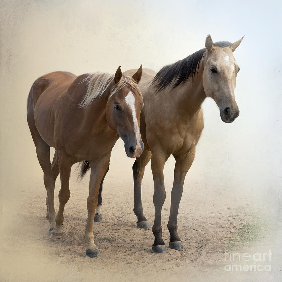 Horse Photograph - Hanging Out Together by Betty LaRue