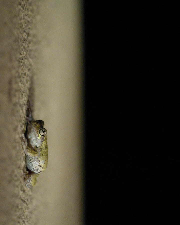 Spring Peeper Photograph - Hanging Out by Zachary Hitchcock