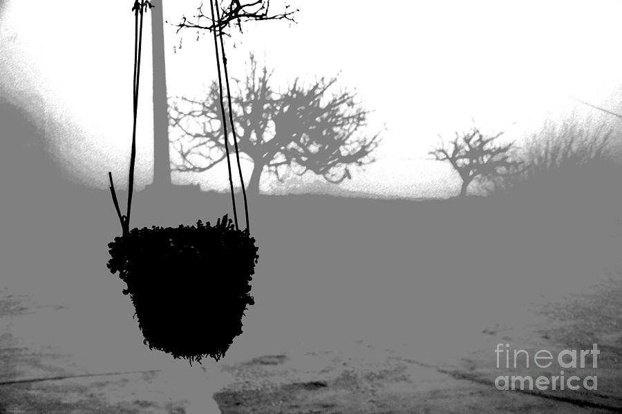Plant Photograph - Hanging Pot Dig by Stefano Piccini