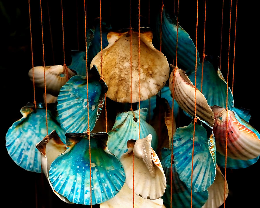 hanging together   sea shell wind chime photograph by