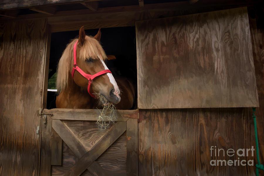 Barn Photograph - Hank Eating Hay by Dan Friend