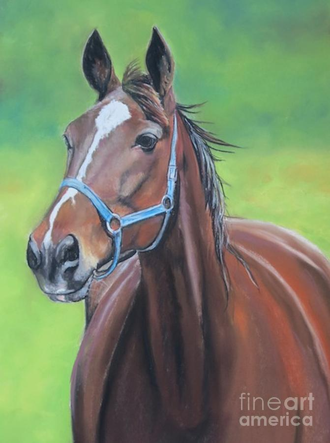 Horse Painting - Hanover Shoe Farm Horse by Charlotte Yealey